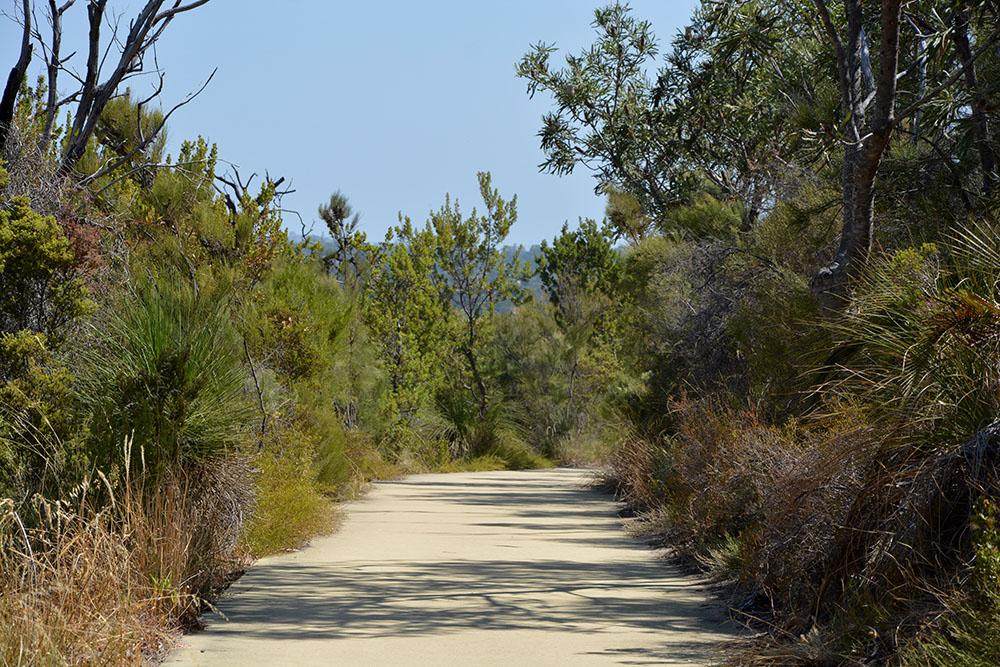 Bushwalk 1