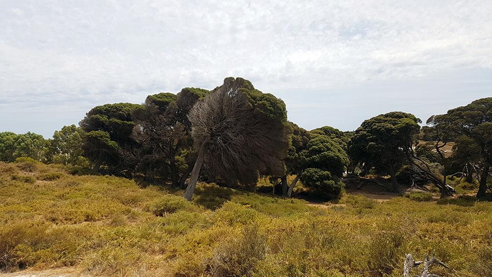 Rottnest Inland 1