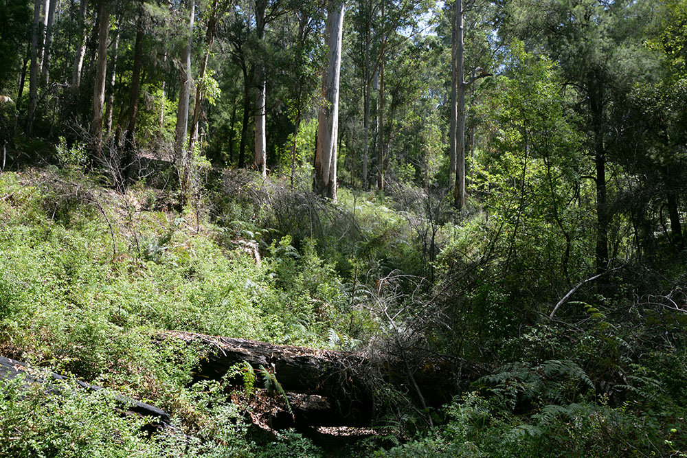 Gloucester Forest 1