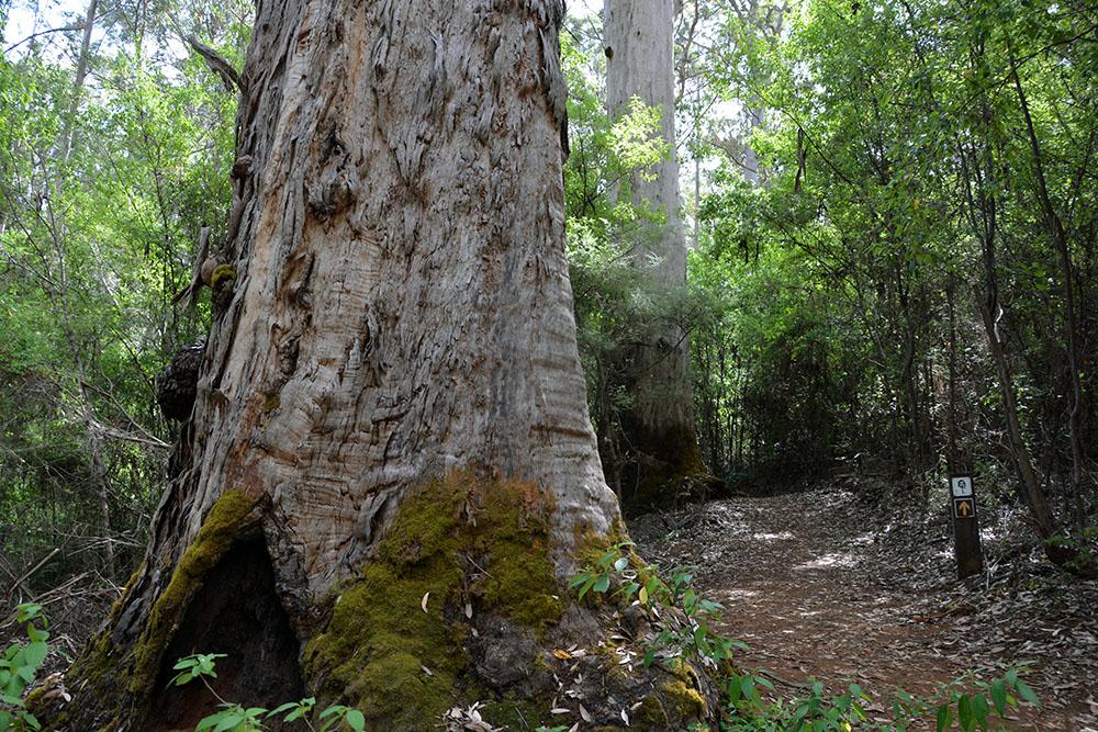 Gloucester Forest 3
