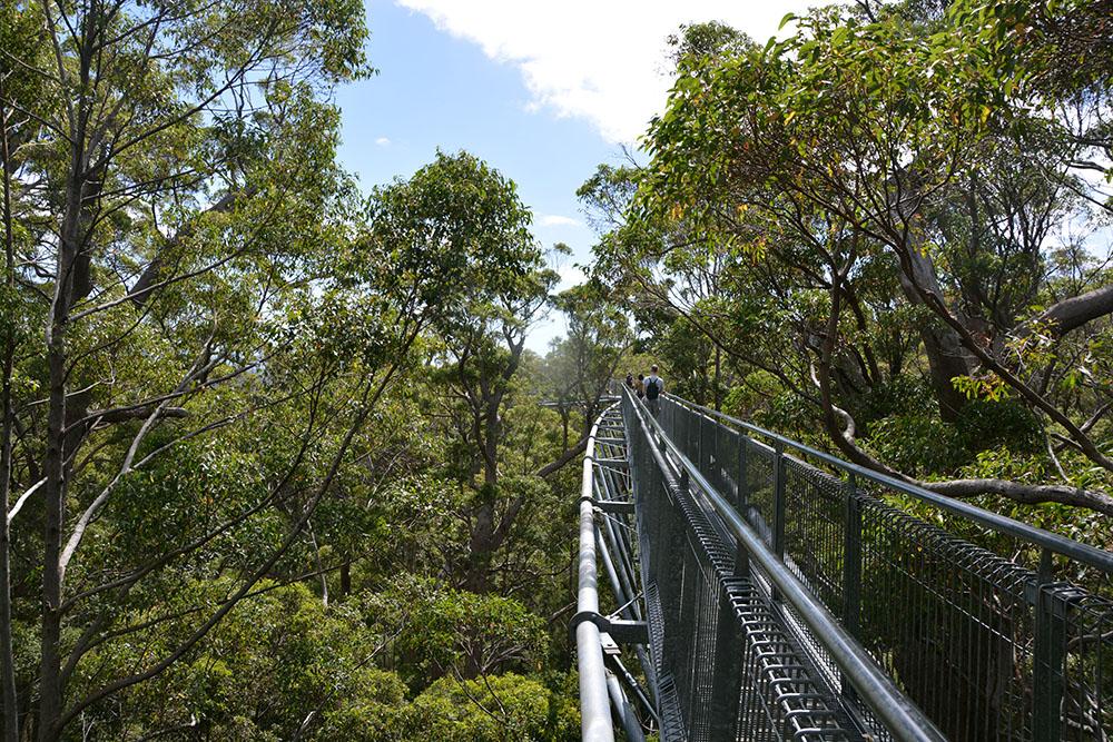Treetop Walk 3